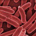 Legionella: fattori di rischio e misure di prevenzione
