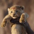 Una serata al cinema – Il re leone