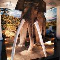 L'elefante antico che viveva a Colleferro 350mila anni fa