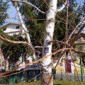 2500 alberi in città:Colleferro presenta il censimento del verde