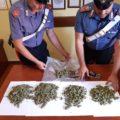 Labico, arrestato con mezzo chilo di marijuana sotto al sedile