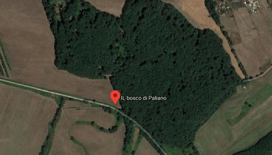 bosco di paliano