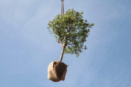 ossigeno regione lazio alberi