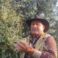 """""""Il mio uliveto a Valmontone: ecco il segreto per fare un olio premiato"""""""