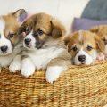 Anagrafe canina ancora offline: adozioni e ricerche bloccate