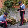 Arrestato con undici chili di marijuana a Valmontone