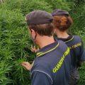 Valmontone, 62 chili di marijuana sequestrati